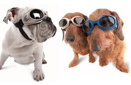Doggles-1